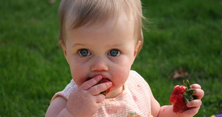 Copil mâncând căpșuni pentru că părinții nu au venit la acest atelier de gătit creativ