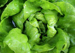usuci salata