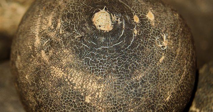 Ridichea neagră, o legumă-comoară