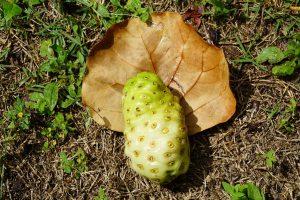 Fructe de noni