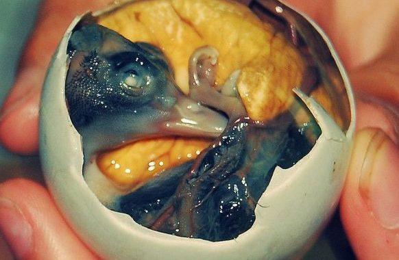 Cele mai ciudate mâncăruri din lume - 1