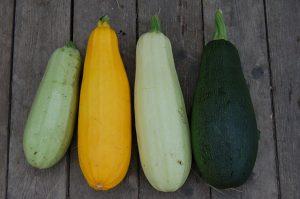 Dovlecelul, leguma nelipsită a verii - 3