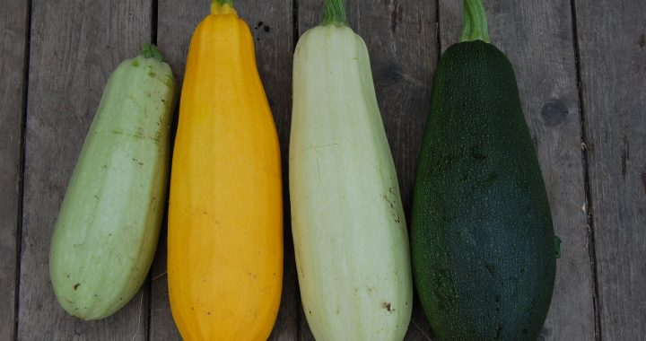 Dovlecelul, leguma nelipsită a verii - 1