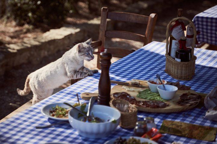 Alimente toxice și periculoase pentru pisici - 1