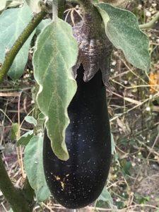 Cum se coc vinetele și ardeii și cum se conservă pentru iarnă - 3