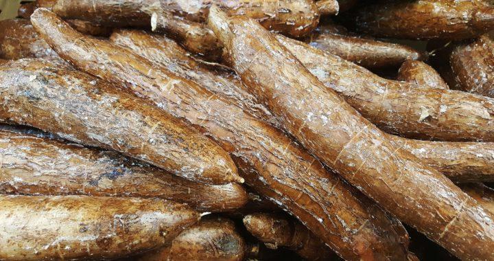 Făina de arorut: o pudră fără gluten, bogată în substanțe nutritive