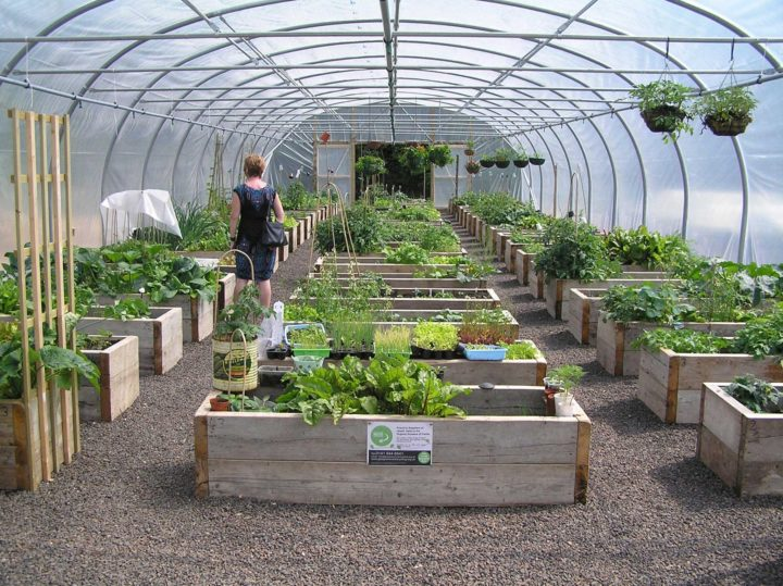 Grădina terapeutică