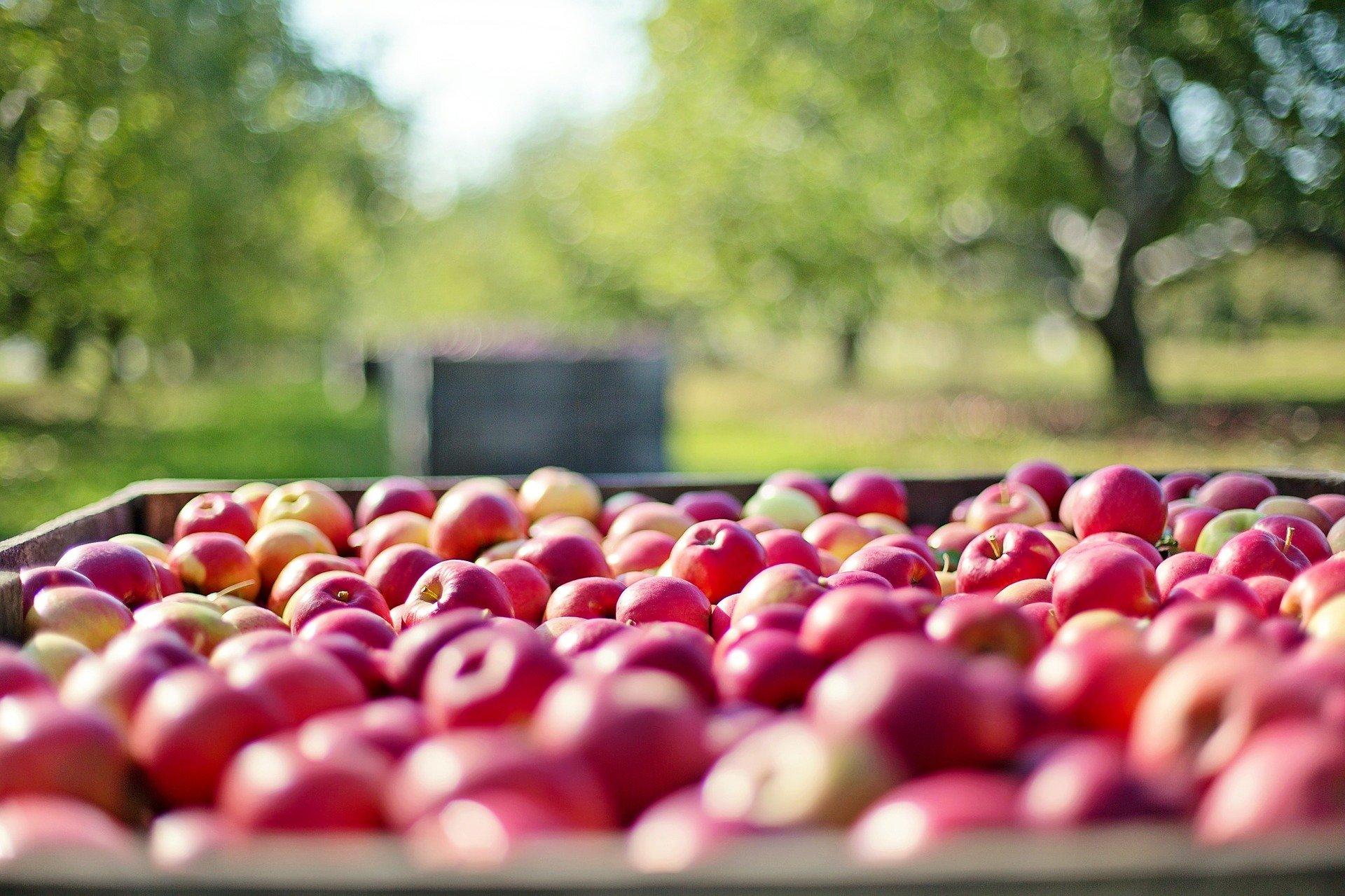 QUIZ: Hai să afli cât de mult îți plac, de fapt, merele! - 1